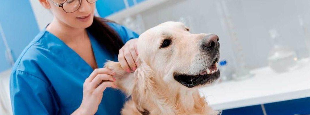 Haz una revisión a tu mascota para evitar enfermedades