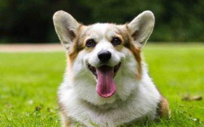 No dejes que la Leishmania y los parásitos amenacen la salud de tu mascota