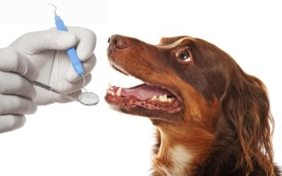 ¿Por qué realizar una higiene bucal a tu mascota?