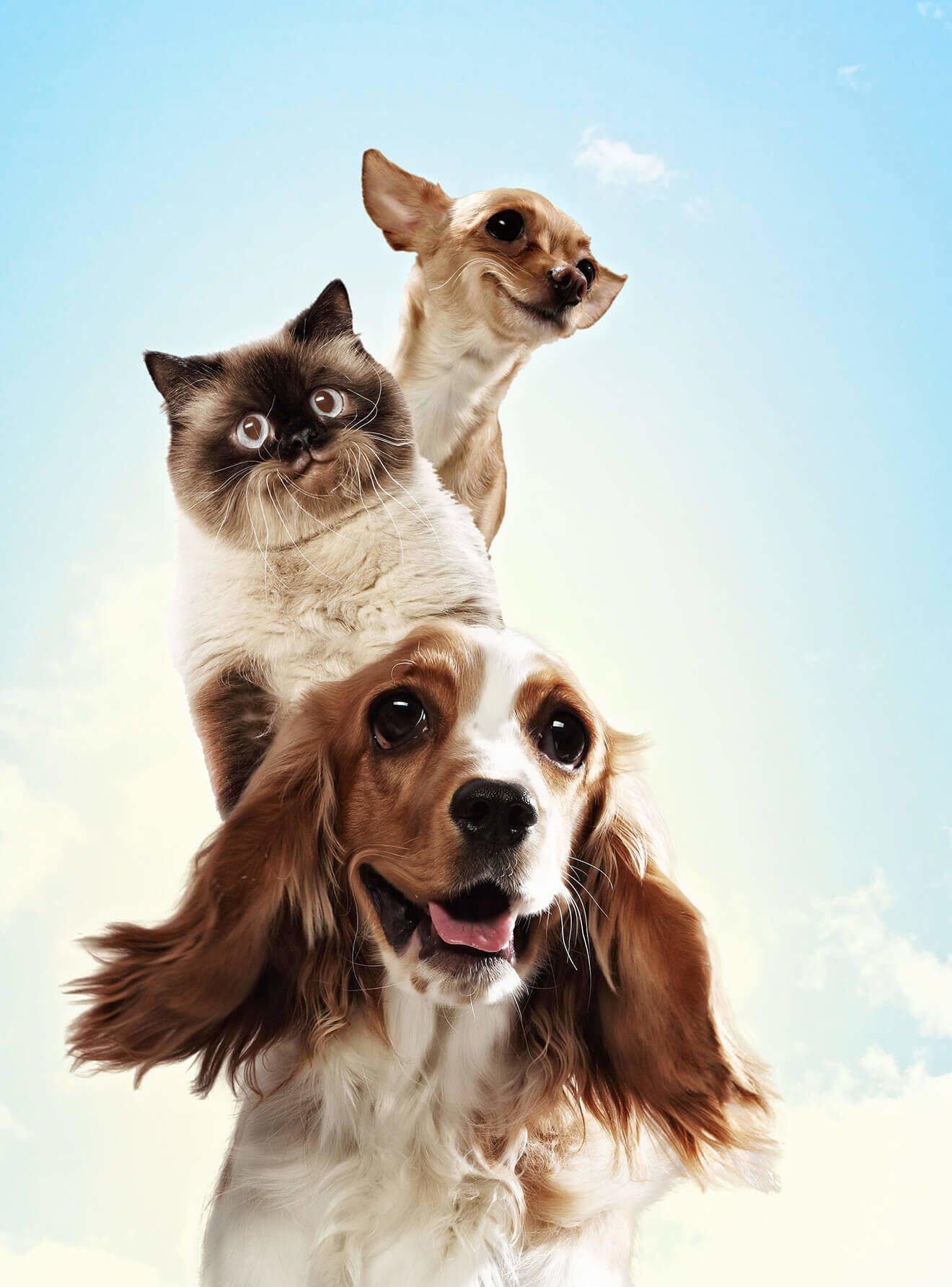 torre de perros y gato sobre cielo azul